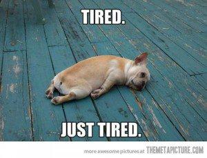 2015431555-funny-dog-tired-sleeping