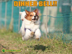 2033261227-funny-dog-picture-dinner-bell