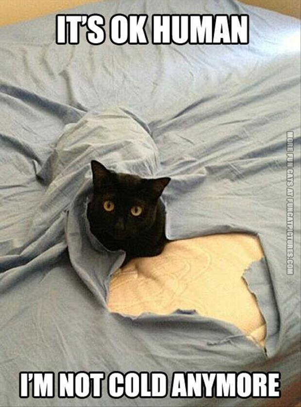 funny-cats-its-ok-human-im-not-cold-anymore
