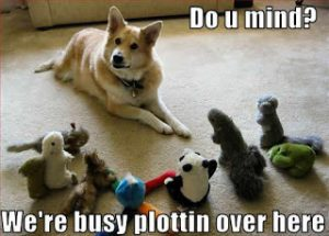 funny-dog-pictures-busy-plottin-300x215