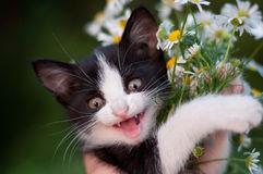 funny-kitten-bouquet-daisies-26540572