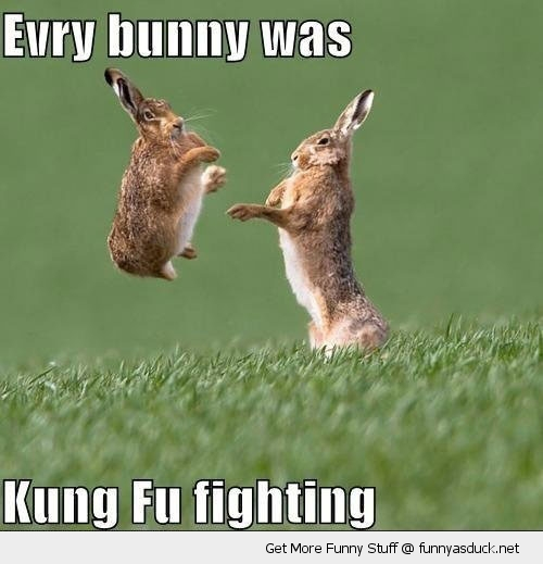 funny-kung-foo-fighting-happy-jumping-rabbits-bunnies-pics