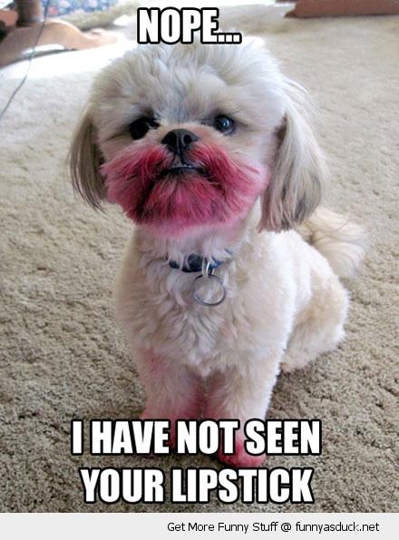 funny-lipstick-dog-pics
