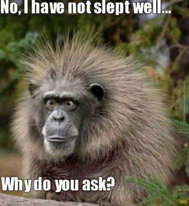 funny-pics-monkey-had-a-bad-sleep