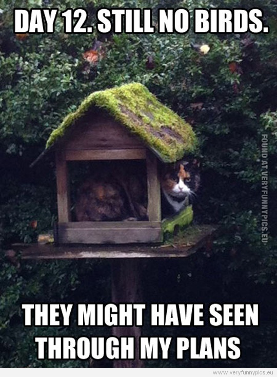 funny-picture-day-12-still-no-birds-they-might-have-seen-through-my-plans