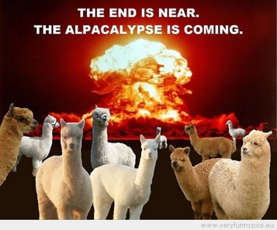 funny-picture-the-end-is-near-the-alpacalypse-is-comming-540x450