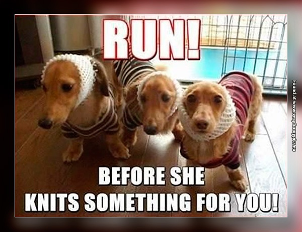 funny-pictures-crazy-dog-lady-knits