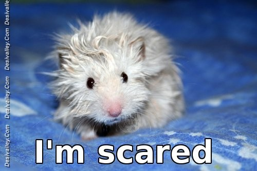 funny-scared-mouse-image