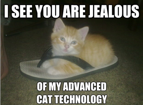 i-see-you-are-jealous-funny-cat-photos
