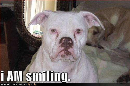 lol-animals-yay-mintys-funny-stuff-26134956-500-332