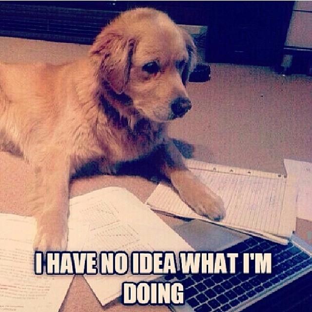 mathpics-joke-meme-humor-funny-mathjoke-mathmeme-haha-pun-dog-homework-confused-cute