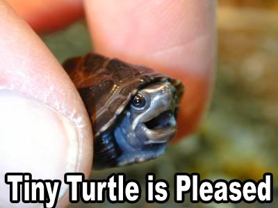 tiny_turtle_pleased