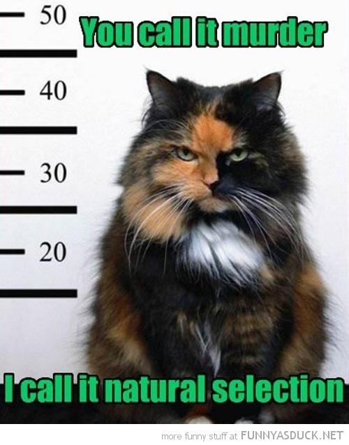 funny-cat-animal-mug-shot-murder-natural-selection-pics