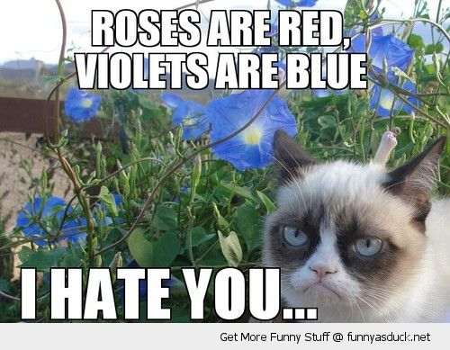 funny-grumpy-angry-cat-roses-red-violets-blue-hate-you-poem-pics