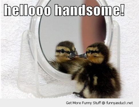 funny-hello-handsome-duck-mirror-pics