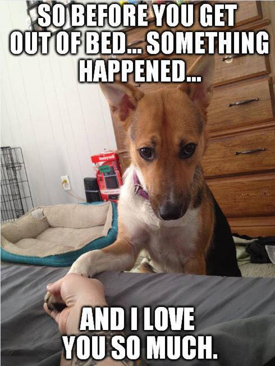 funny-pictures-guilty-dog-love-you-so-much