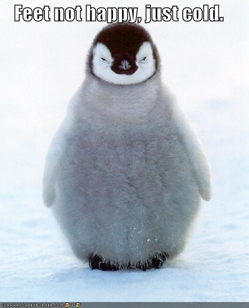 funny-pictures-penguin-does-not-have-happy-feet-but-rather-cold-ones