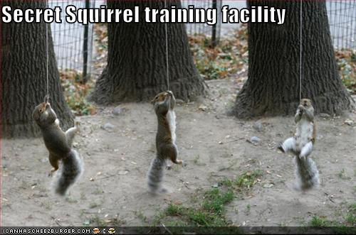 funny-pictures-secret-squirrels