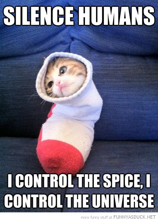 funny-silence-human-dune-cat-kitten-spice-universe-pics