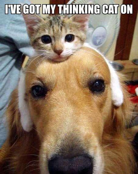 thinking-cap-or-thinking-cat-funny