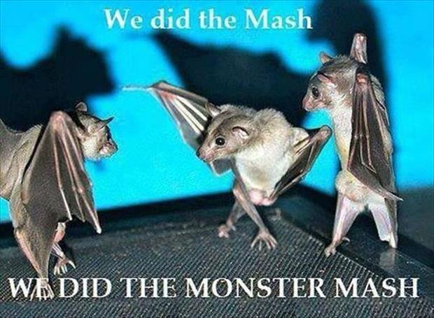 we-did-the-mash-we-did-the-monster-mash