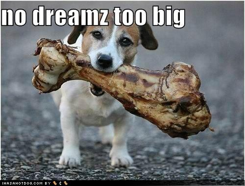 funny-dog-pictures-there-are-no-dreams-too-big-for-dog1